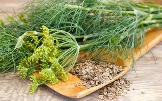 Использование семян укропа в кулинарии