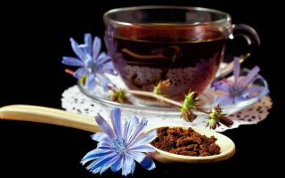 Как готовить вкусный и полезный цикорий напиток?