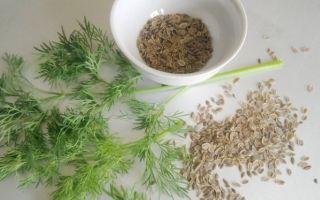 Укроп лечебные свойства: рецепты и рекомендации