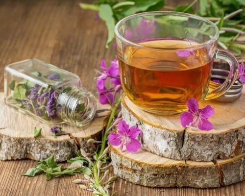Полезные свойства и применение отваров душицы