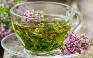 Необыкновенные свойства обыкновенной травы душицы
