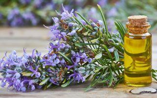 Эфирное масло розмарина: топ 8 удивительных свойств