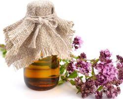 Полезные свойства душицы лечебной