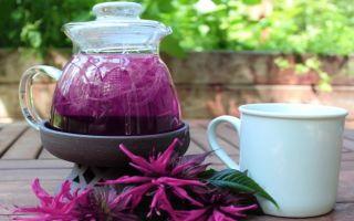 Целебный монарда чай в домашних условиях