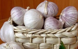 Чеснок рокамболь: лук или все-таки чеснок?