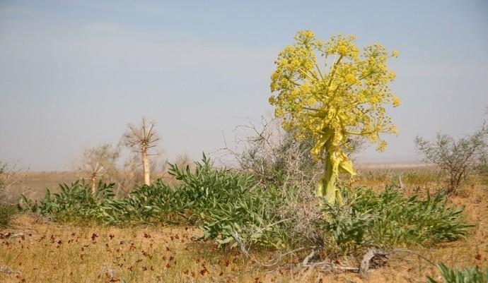 Пустынное растение