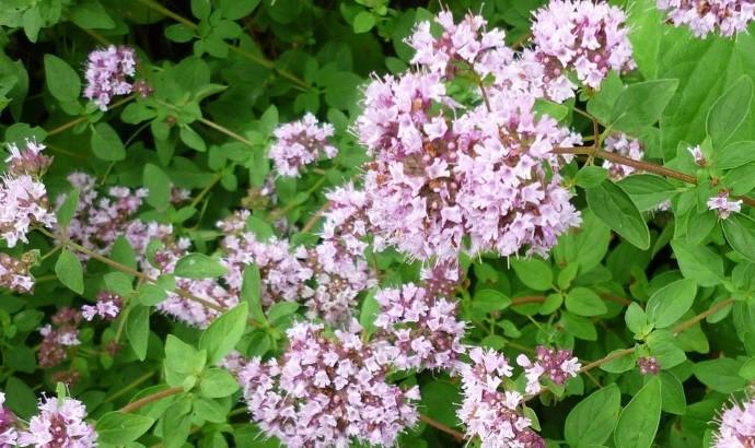 Приятный запах цветов
