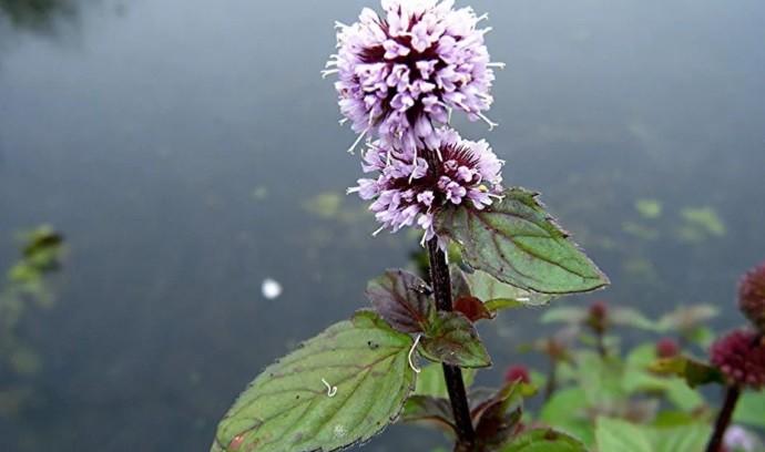 Цветок у реки