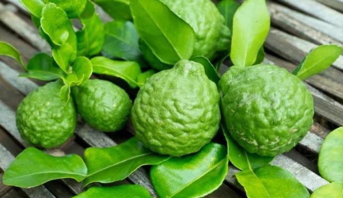 Зеленые плоды
